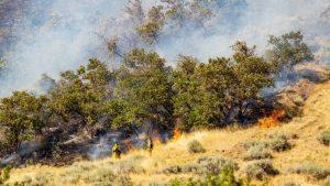 Wildfire Workers in Utah